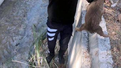 Sulama kanalına düşen yavru köpekleri itfaiye kurtardı